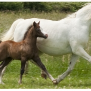 gails-foals-2011-011