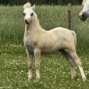 gails-foals-2011-012